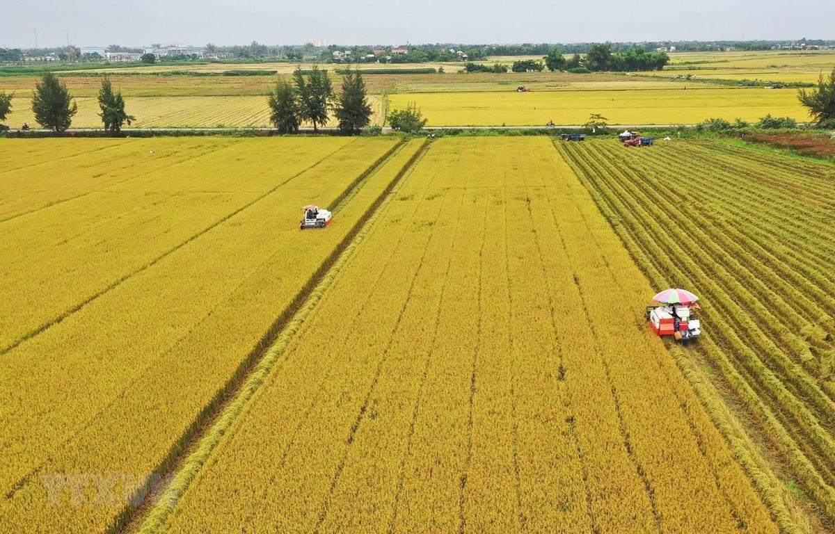 Chuyển mục đích sử dụng đất trồng lúa ba tỉnh Long An, Hải Dương, Thái  Nguyên   baotintuc.vn