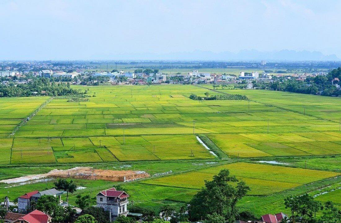Có nên mua đất trồng lúa? Lợi ích và rủi ro   Tập Đoàn Trần Anh Group
